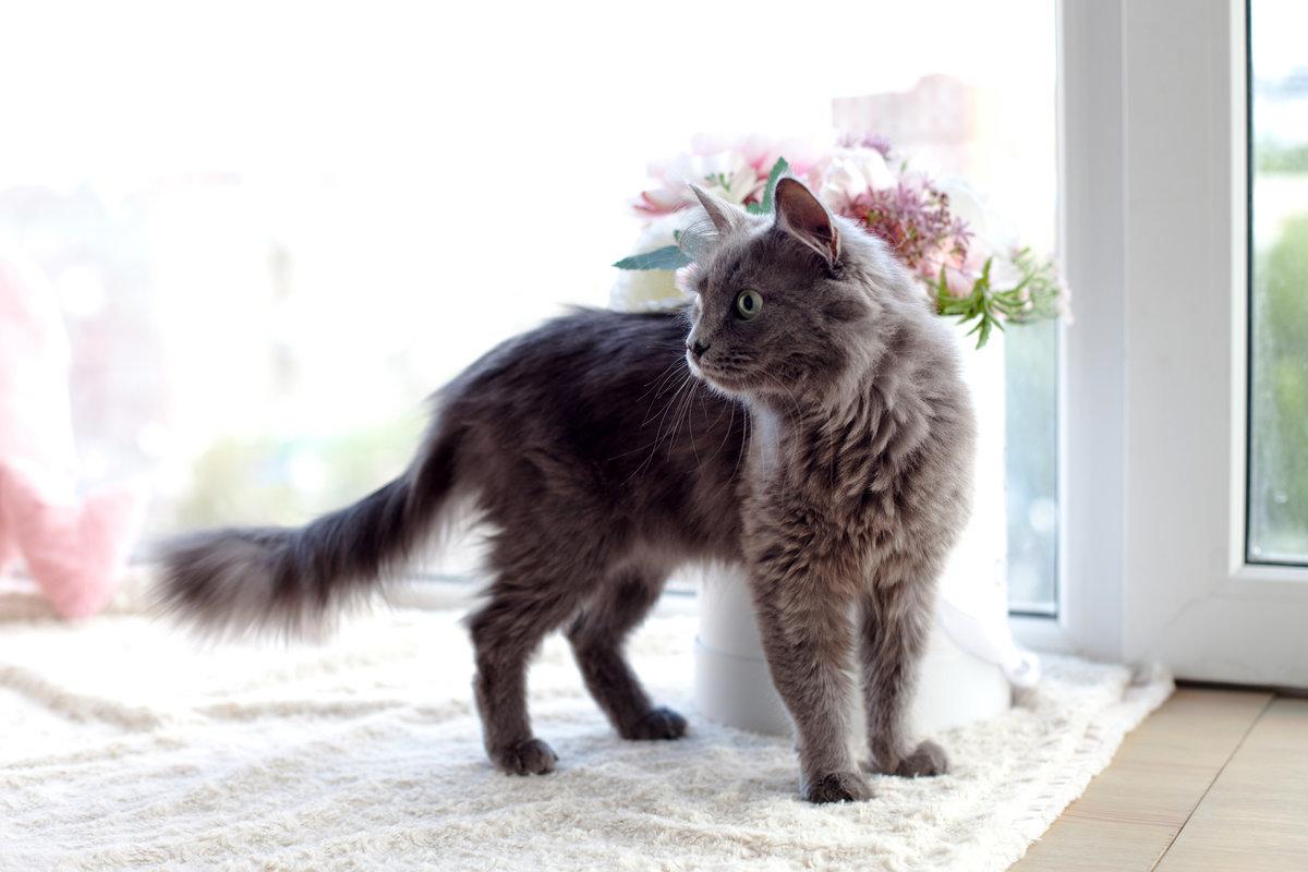 Почему в доме не приживаются кошки: приметы и рациональные причины