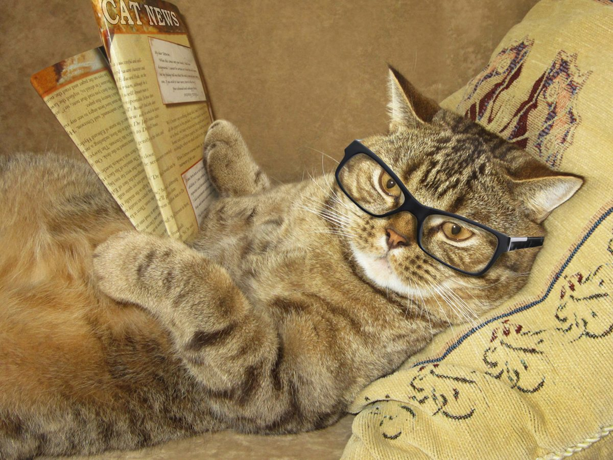 ТОП-7 самых умных пород среди кошек