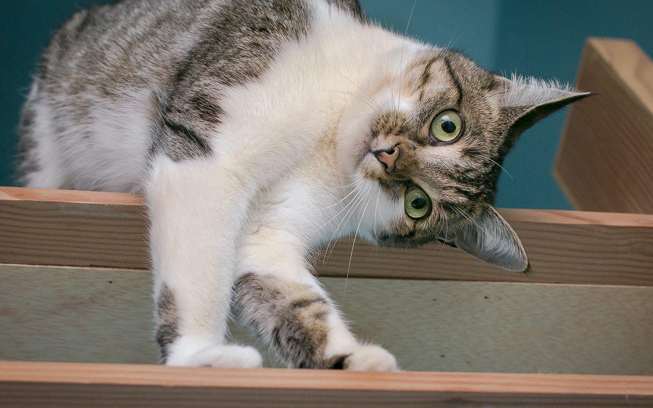 Невербальное общение: как понять кошачий язык тела