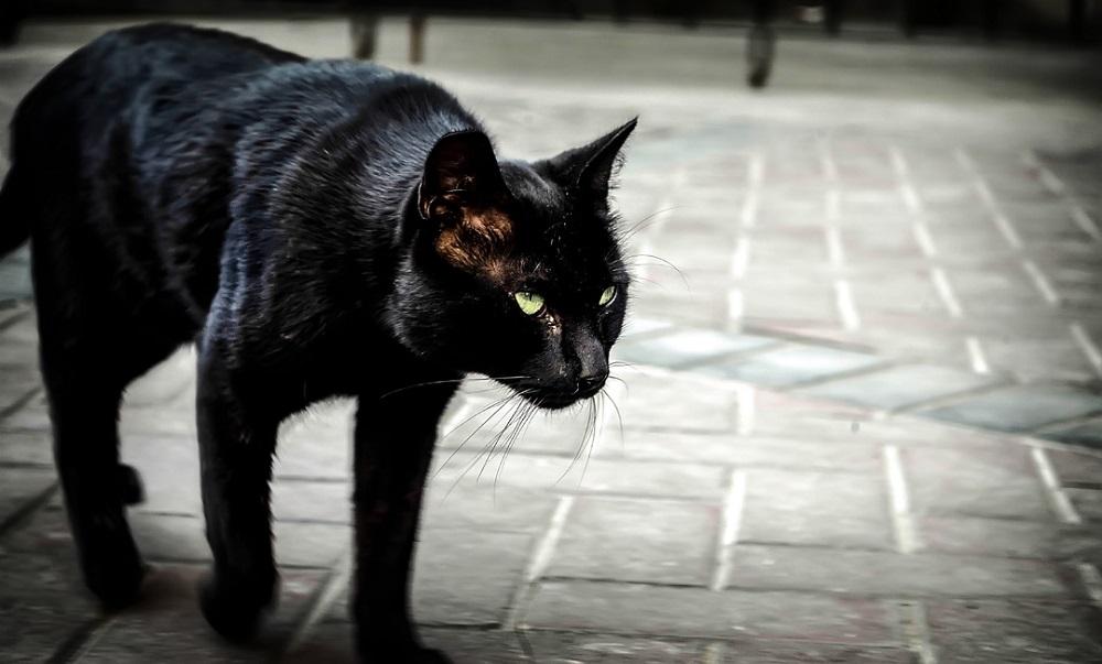 Что на самом деле значит примета о черной кошке на дороге
