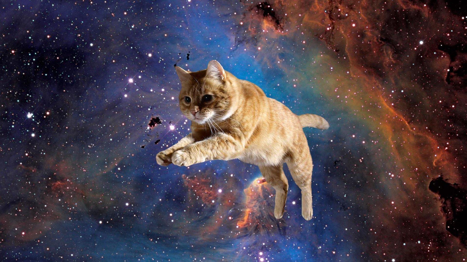 Идеальная пара: какие породы кошек подходят каждому знаку Зодиака