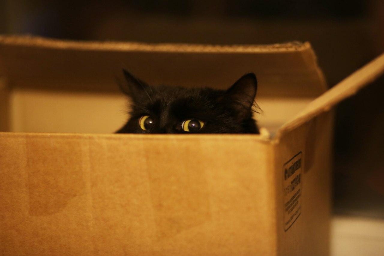 Тайное укрытие: почему кошки любят коробки