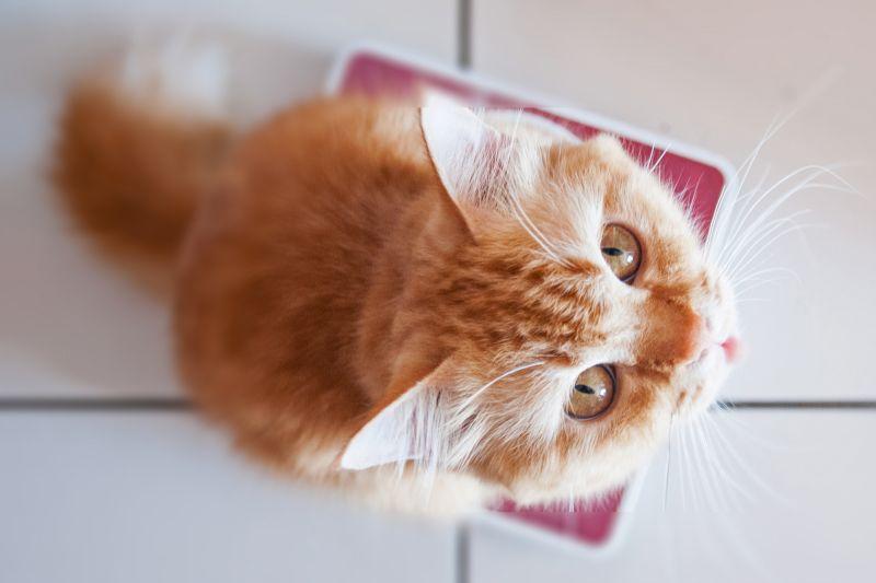 Взвешивание кошки
