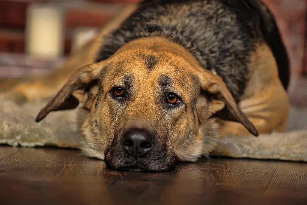 Первые признаки цистита у собак: спасаем любимца
