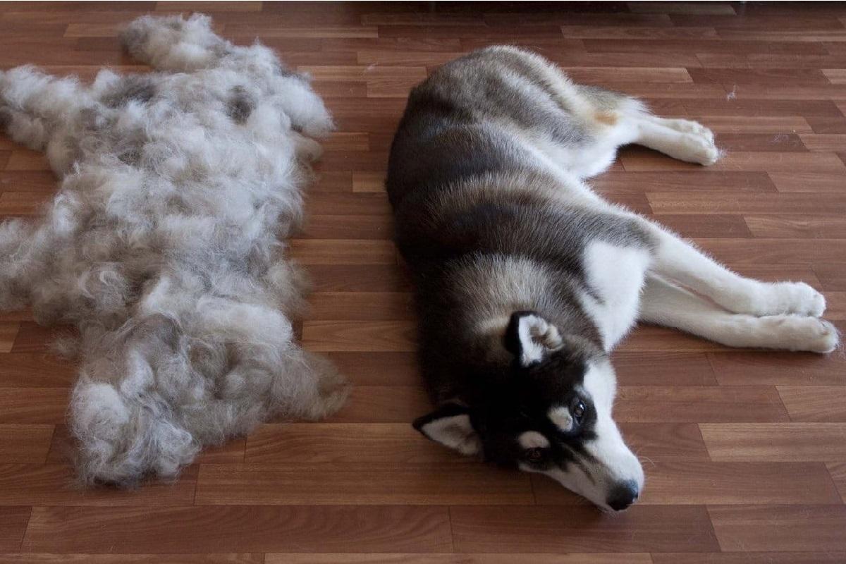 Это точно не линька: почему у собаки выпадает шерсть