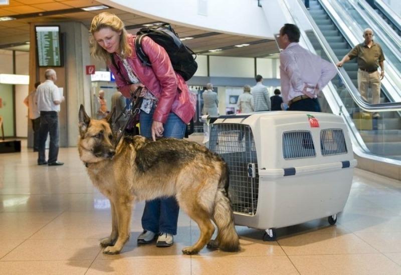 Как и в каком транспорте перевозить животных, чтобы не навредить им