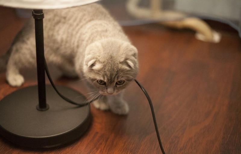 Котенок грызет провода