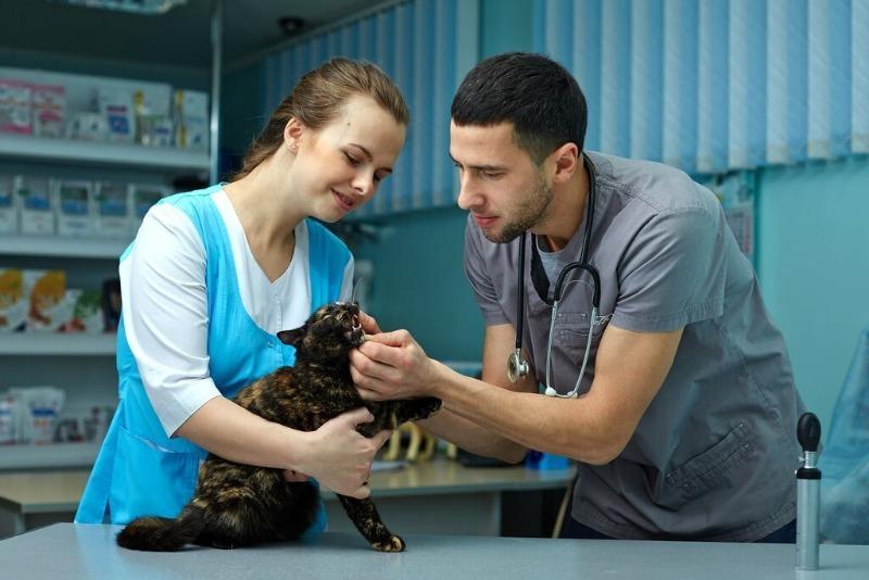 Бежим и не оглядываемся: как определить недобросовестного ветеринара