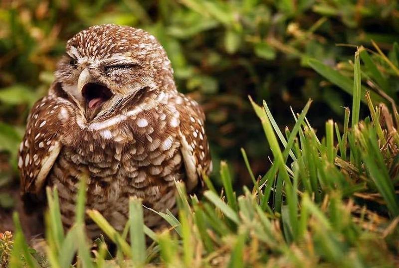 К чему увидеть живую сову во сне или наяву