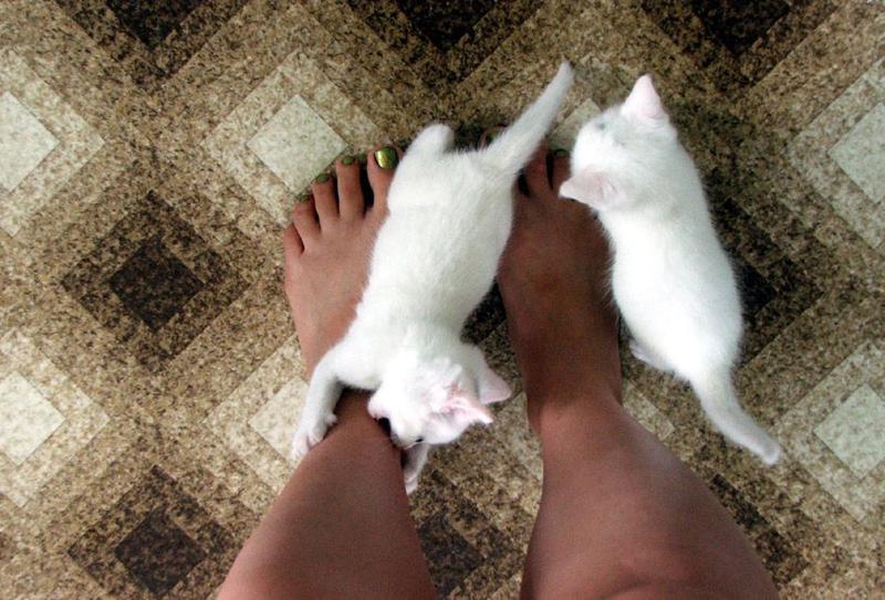 Почему кошка бросается на ноги