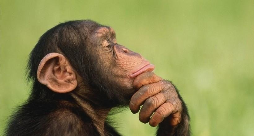 10 самых умных животных на земле, чей интеллект удивил ученых