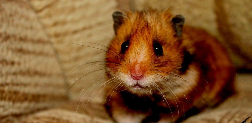 9 животных-лекарей, общение с которыми ускоряет лечение