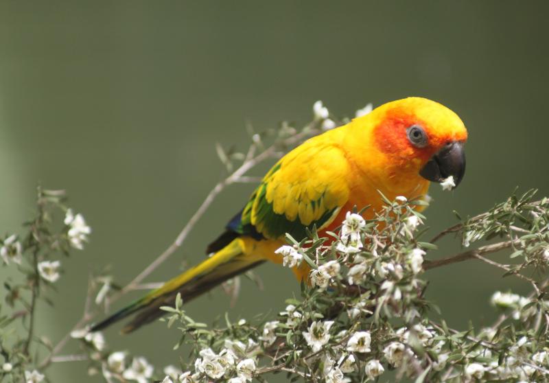 5 самых умных домашних попугаев, которые не принесут вам хлопот