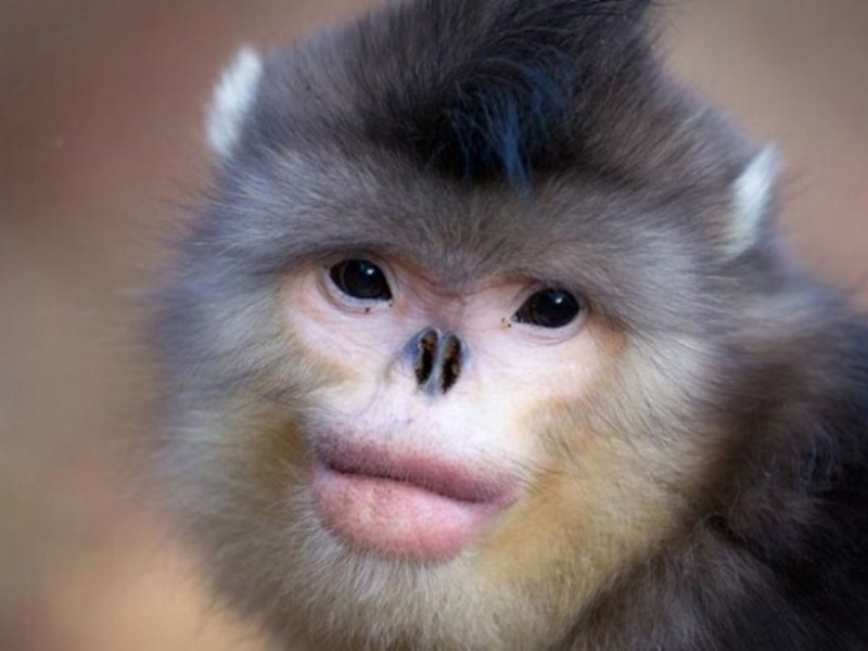 Рыжебородый Тити и лесула: 15 животных, о существовании которых человек узнал лишь в 21 веке