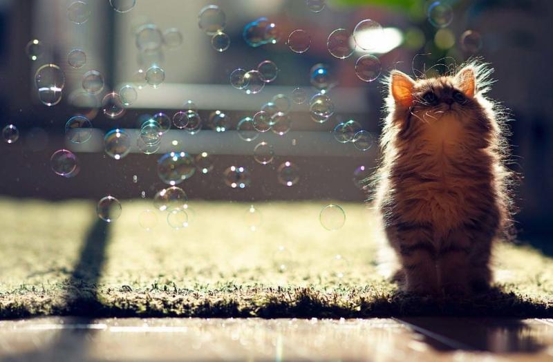 Странные привычки: почему кошка ест мыло