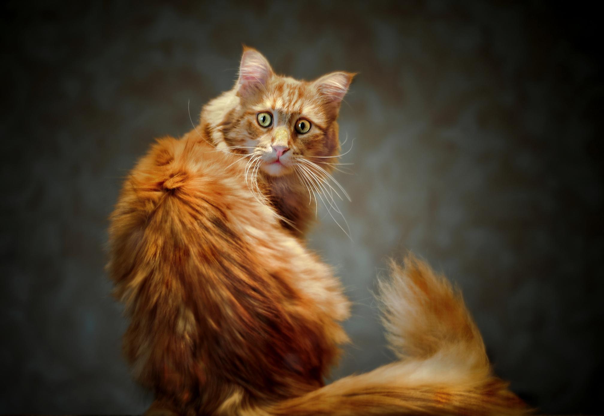 5 веских причин кастрировать кота, даже если вы против операции