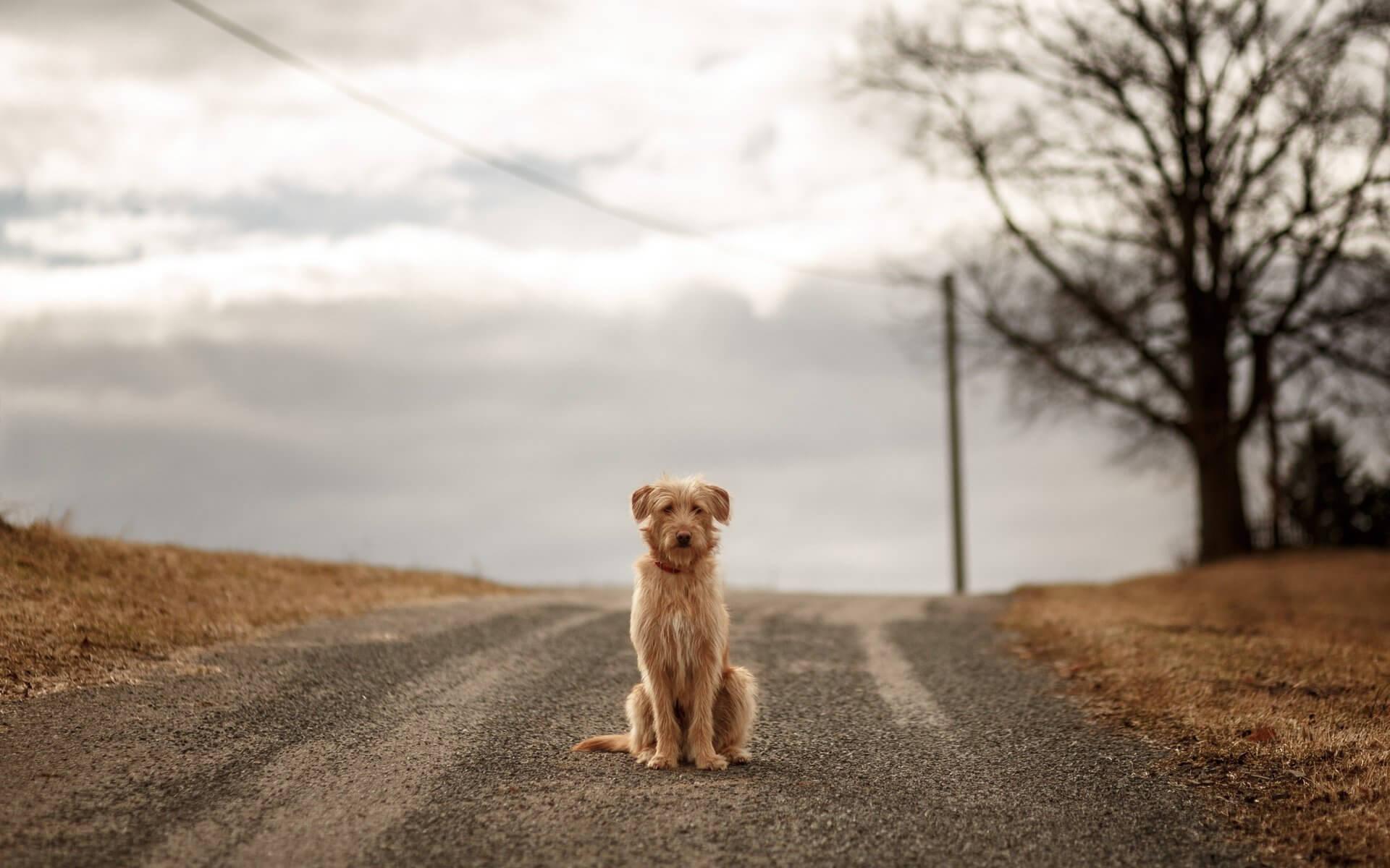 К чему перебегает дорогу собака: хорошая примета или плохая