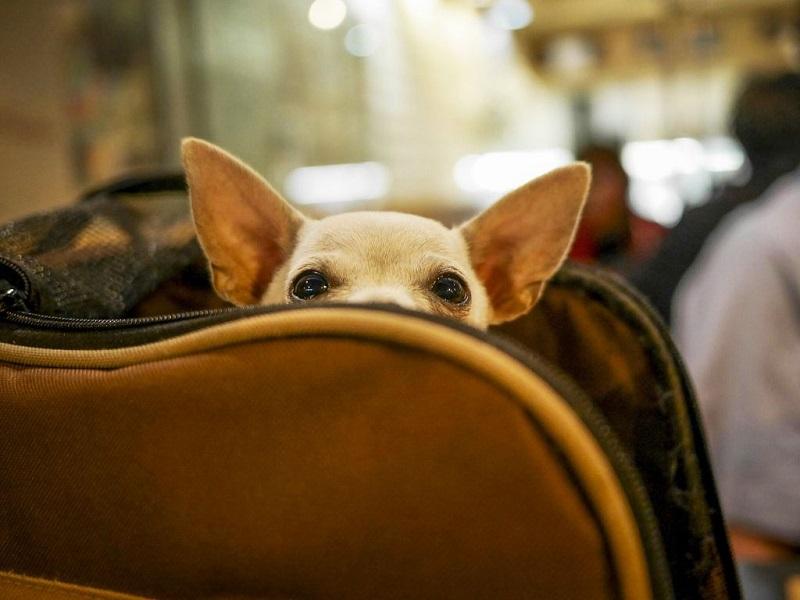 Сезон отпусков в разгаре: 5 советов, как перевозить собаку в самолете