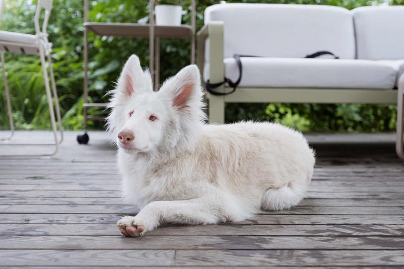 Удивительная история популярной собаки Август из «Инстаграма»