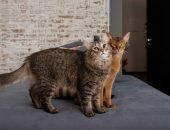 коты Саня и Гоша