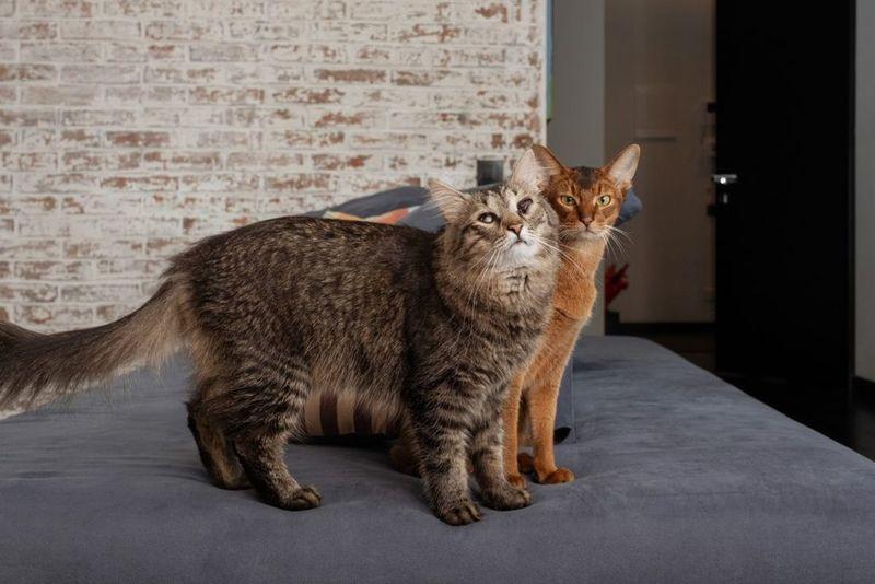 Два кота из «Инстаграма»: дерзкий Саня и слепой Гоша