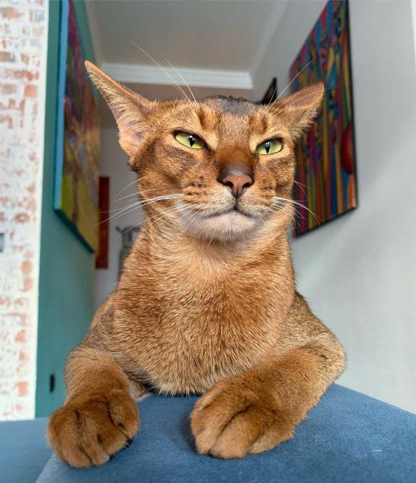 Кот Саня