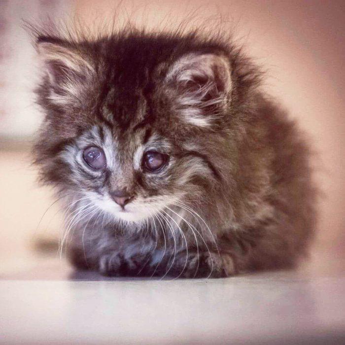 Котёнок Гоша