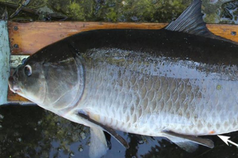 Найдена рыба-рекордсмен возрастом более века