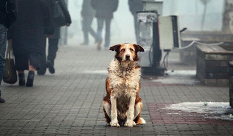 Зоозащитники отметили Всемирный день бездомных животных