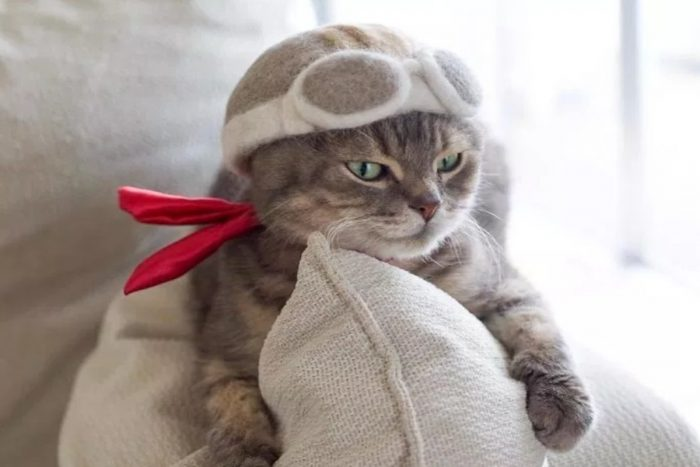 Шляпки для котов из шерсти