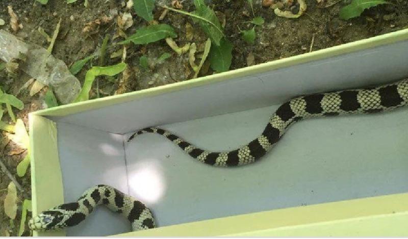 В Подмосковье спасатели помогли поймать змею, заползшую в квартиру