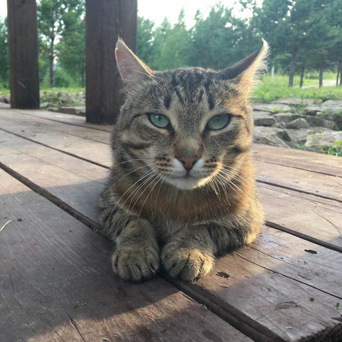Кот Йося
