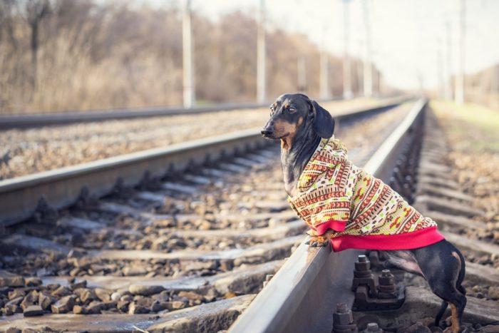 Такса Дин на железной дороге