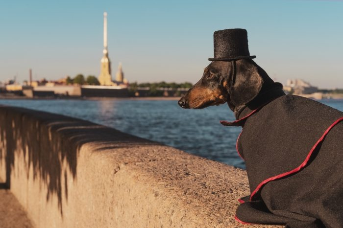 Такса Дин в шляпе