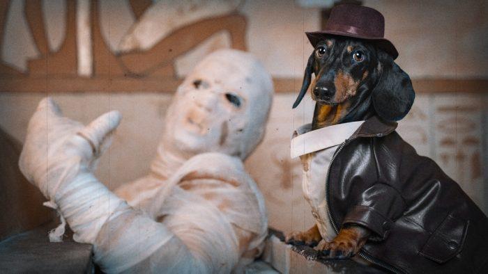 Такса Дин и мумия