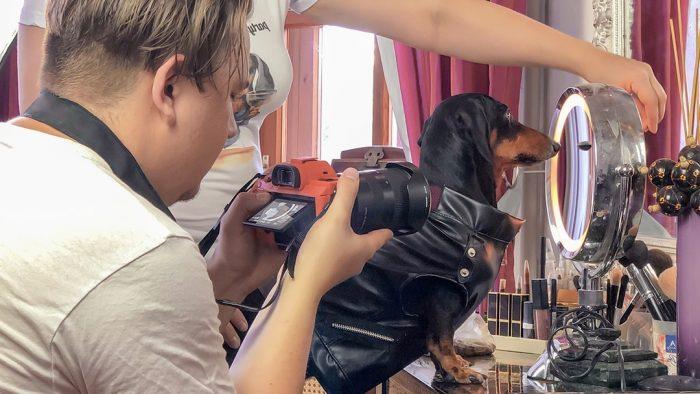 Такса Дин в процессе съёмок