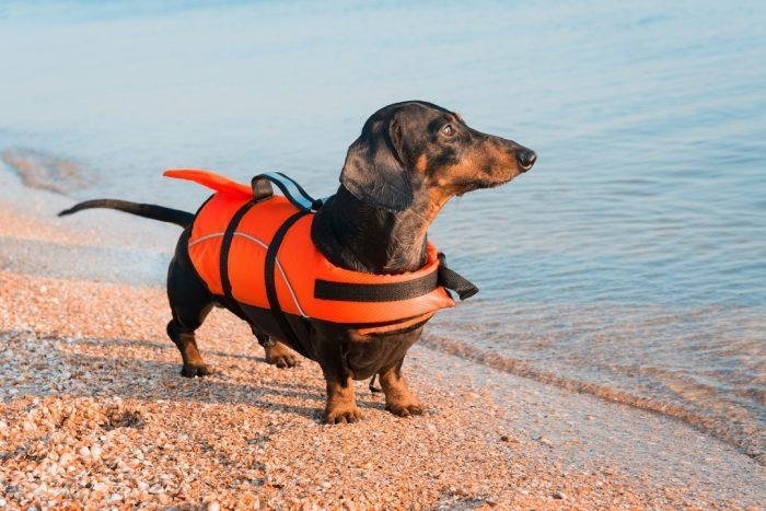 Такса Дин на пляже