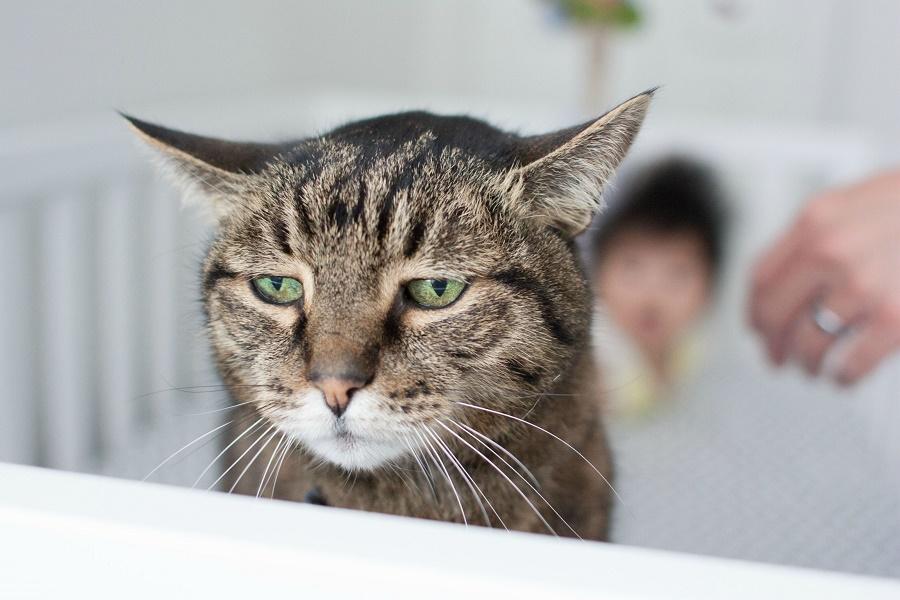 Ну и шантажист: как кошки нами управляют