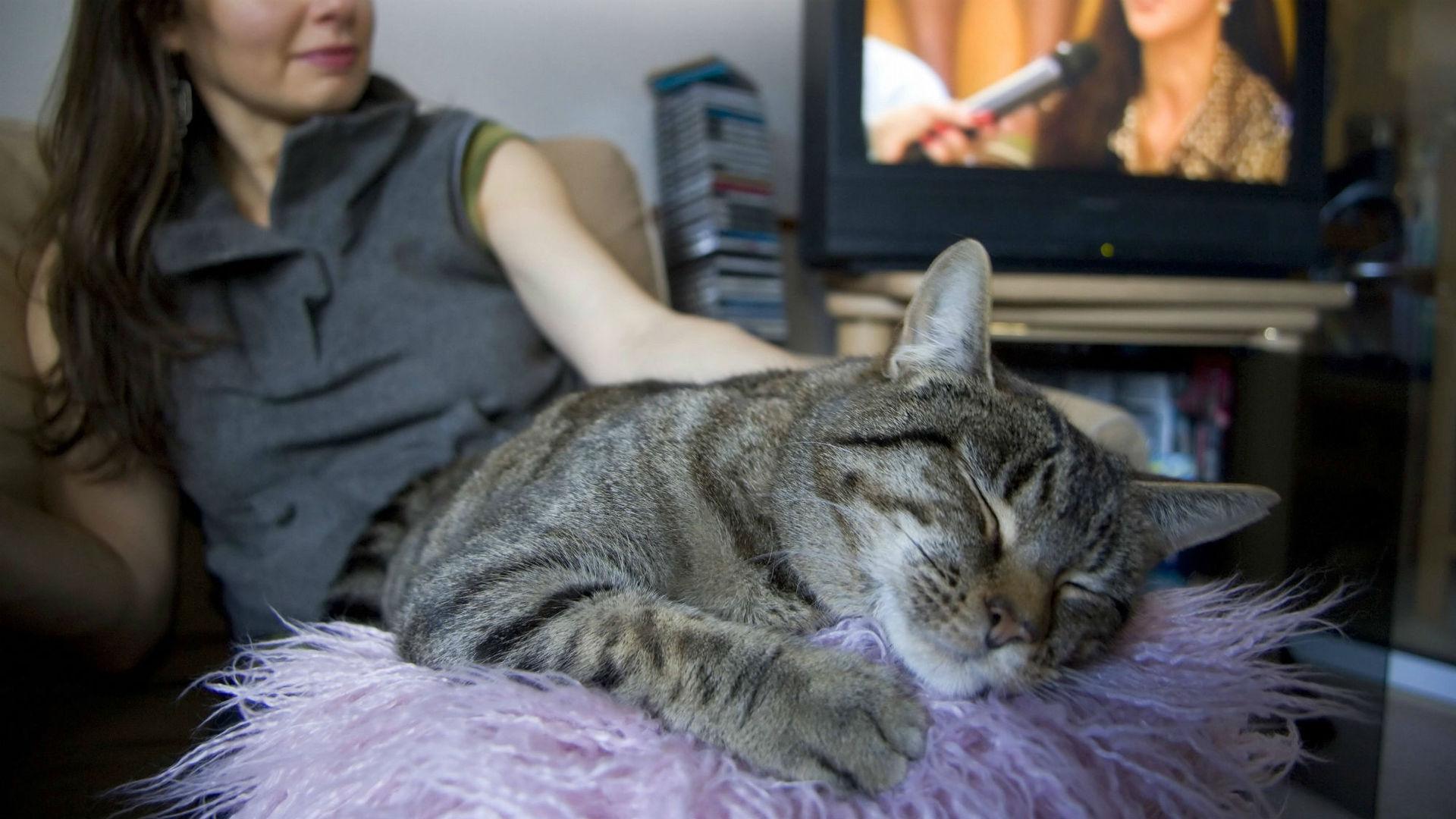 Как настроение хозяина влияет на кошку