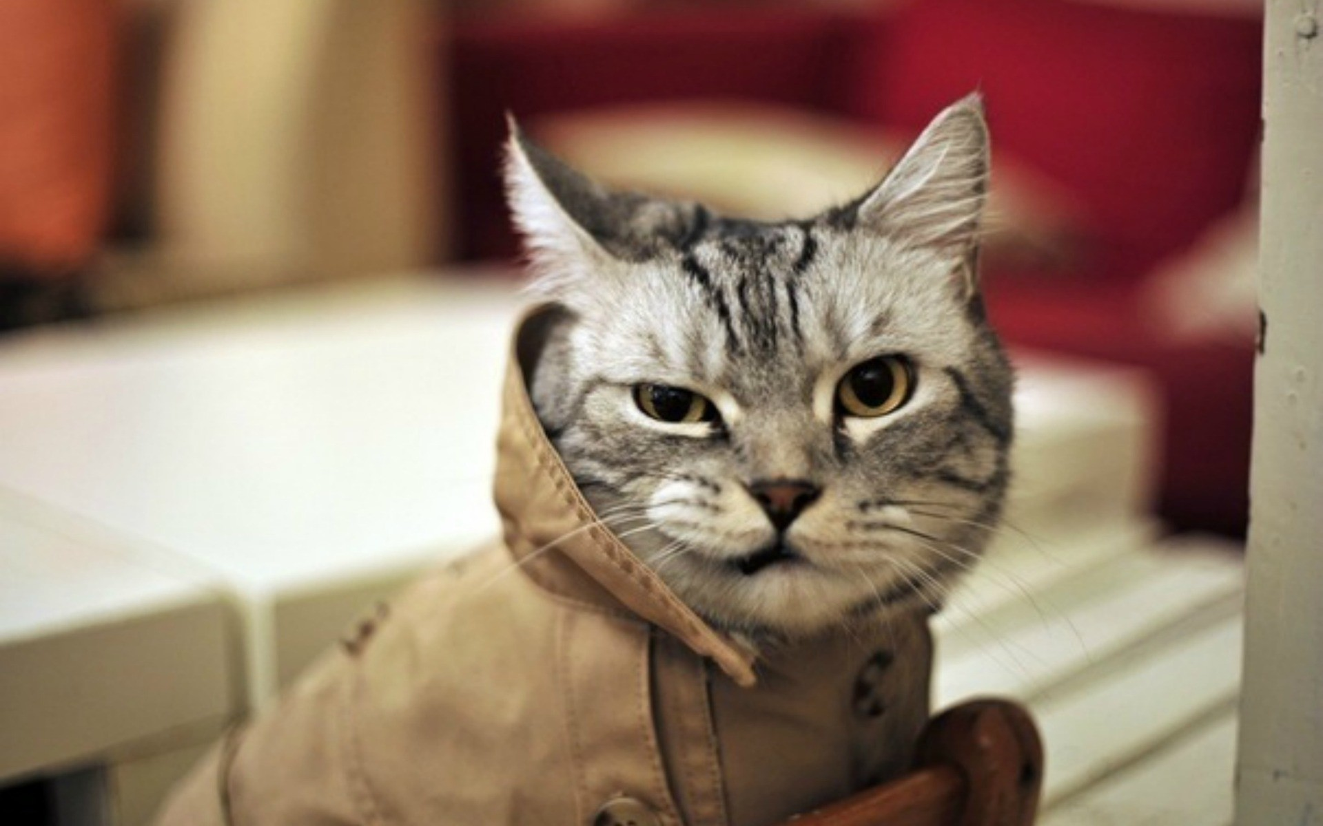 Пушистые преступники: кто из животных попадал под суд