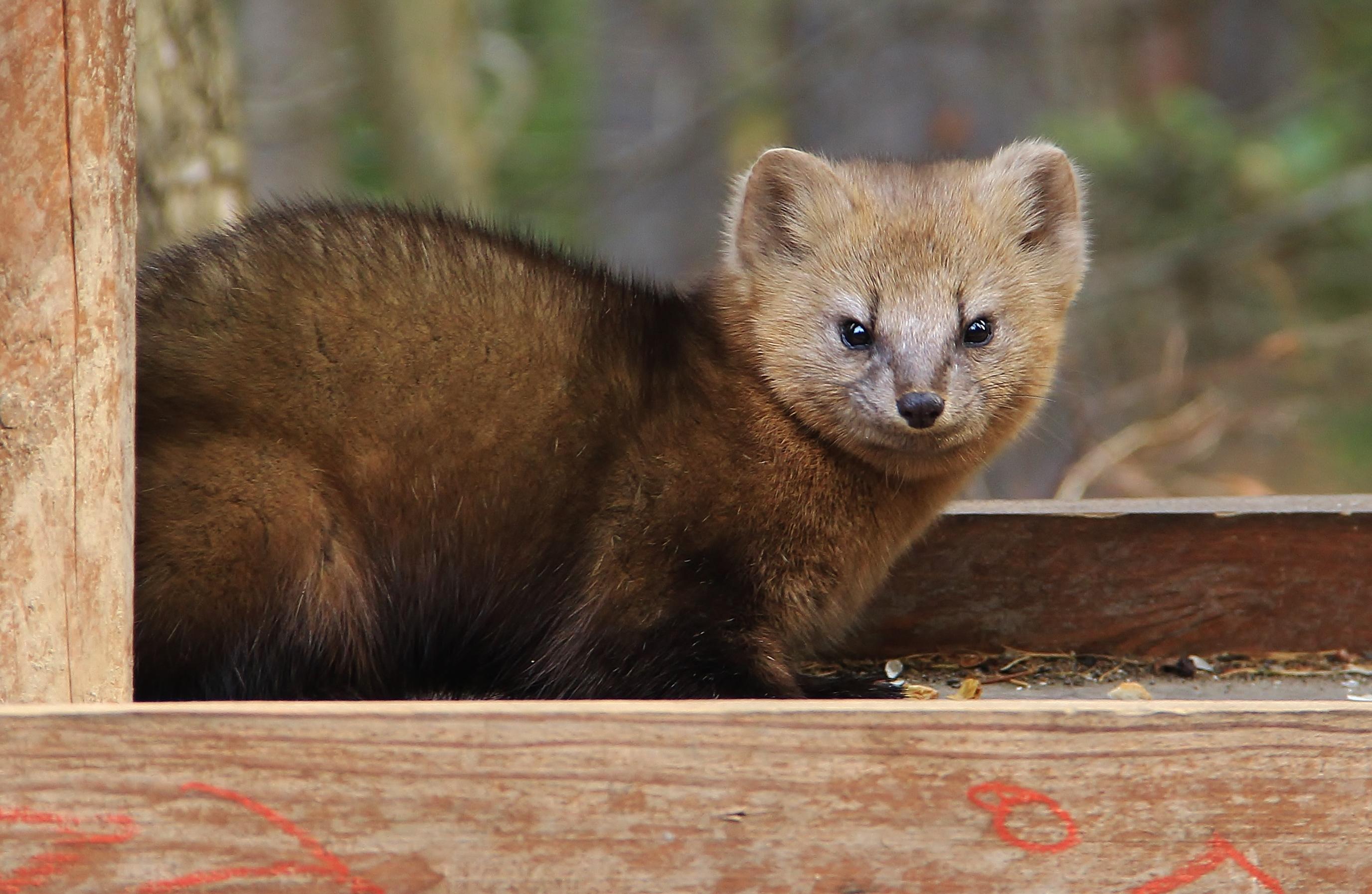 Нестандартный выбор: 5 диких животных, которые уживутся у вас дома