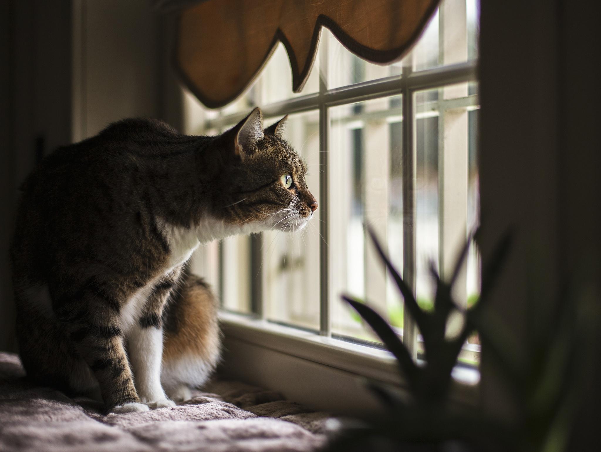 Вечерами напролет: 5 причин, почему кошка любит сидеть на подоконнике и смотреть в окно