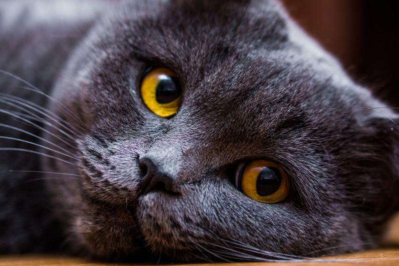 Чем промыть кошке глаза до посещения ветеринара, если обнаружили загноения у питомца