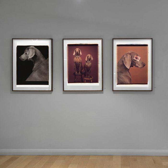 Фотографии Уильяма Вегмана
