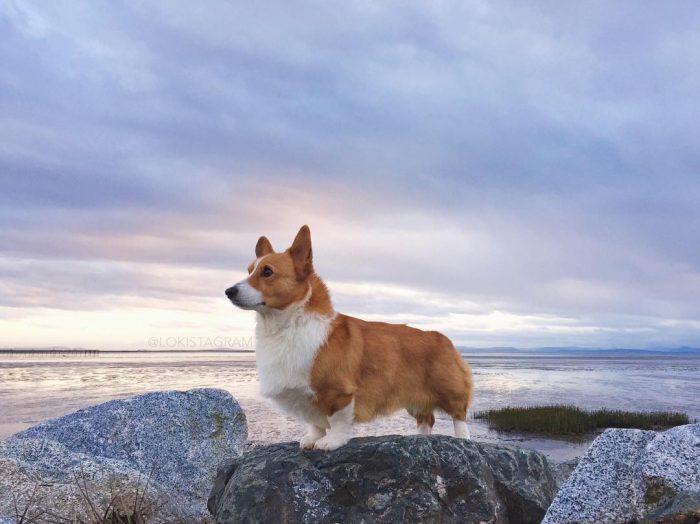 Собака Локи