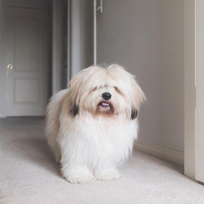 Собака Момо