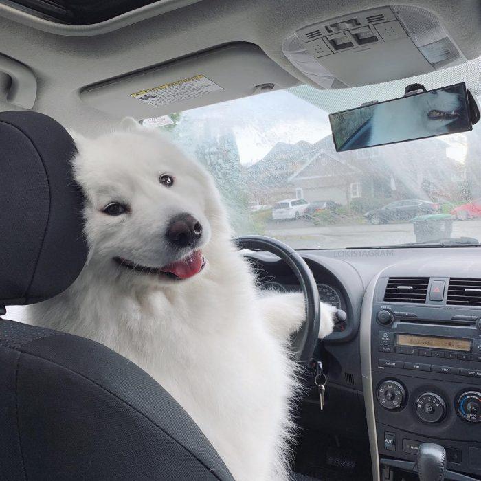 Собака Медвежонок