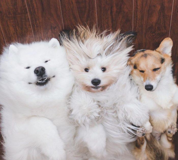 Собаки Локи, Медвежонок и Момо