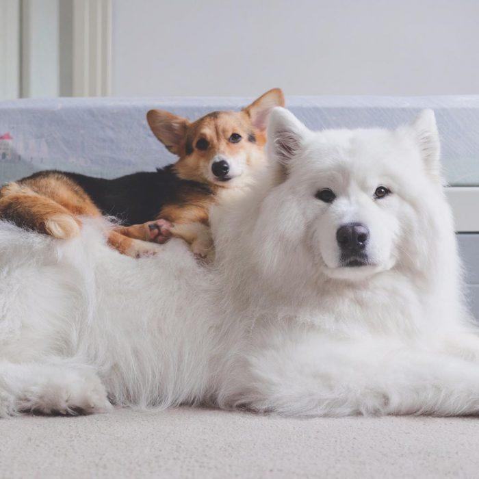 Собаки Локи, Медвежонок