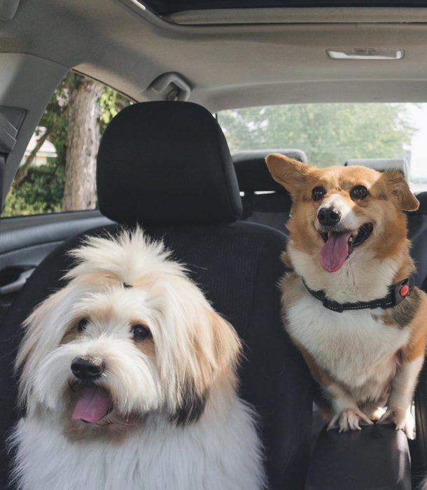 Собаки Локи и Момо